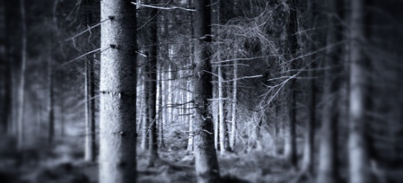 Dark-woods-580x375_Snapseed