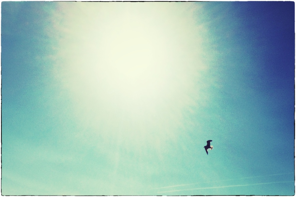 bird soaring through sky