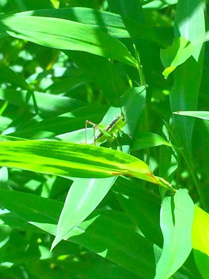 Grasshopper #thriftycampers