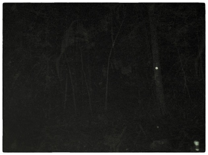 nighttime woods#thriftycampers